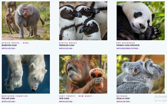 باغ وحش سن دیگو