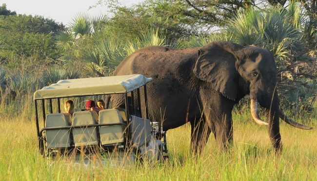 پارک فیل های تمبه