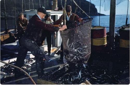 ماهیگیری دریاهای عمیق