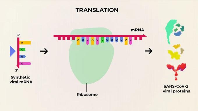 واکسن mRNA ؛ نسل جدیدی از واکسن ها