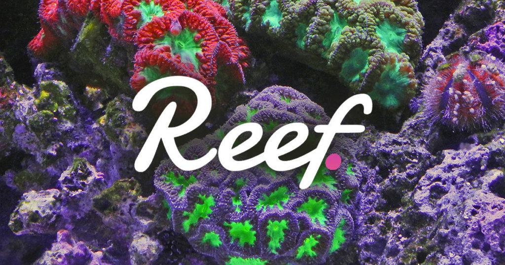 آینده و پیش بینی قیمت ارز دیجیتال ریف (Reef)